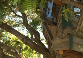 Mostra Treehouses-Abitare sull'albero alla Villa dei Vescovi
