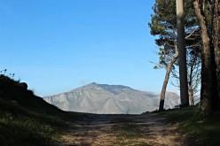 In Sicilia rinasce un bosco con l'aiuto di Leroy Merlin