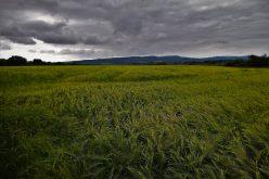 I prodotti chimici per l'agricoltura andranno in discarica